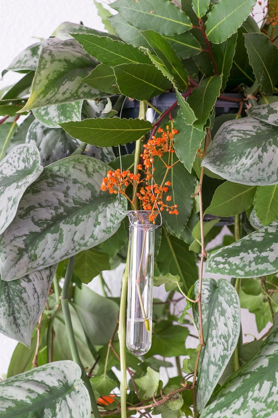 Herfst decoratie met plant en physalis (lampionnetjes)-stap voor stap
