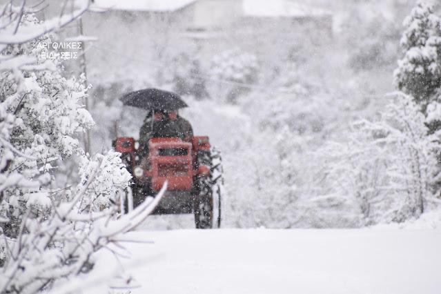 Απίστευτο χιόνι στο Πλατάνι Αργολίδας - Δήμος και κοινότητα άνοιξαν το δρόμο