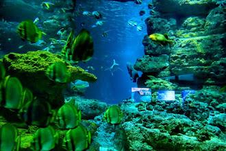 Coup de Coeur : A l'Aquarium de Paris, Officine Panerai célèbre son ambassadeur, le champion d'apnée Guillaume Néry, avec la maison de Champagne Billecart-Salmon