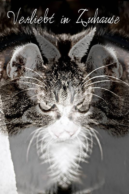 Katzenfotografie -Bildbearbeitung 2in1