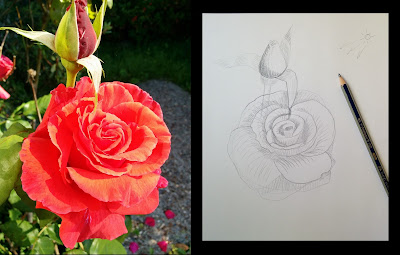 collage photo of rose next to a basic sketch of a rose on paper