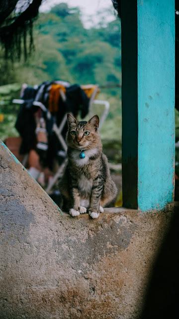 Penyebab Kucing Menjadi Mogok Makan