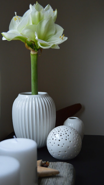 Mitt juleverksted: Lag et adventsarrangement på rekved. Amaryllis i hvit Kählervase. Furulunden
