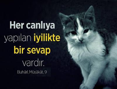 """""""Her canlıya yapılan iyilikte bir sevap vardır.""""  Hz. Muhammed (sas), kedi, tekir, hayvan sevgisi"""