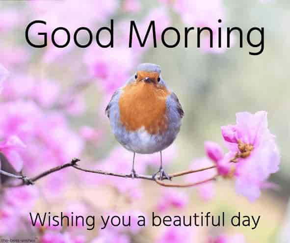 good morning images of nature with bird
