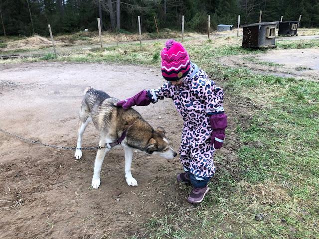 Talviloma Suomessa - Huskysafari Kuusamossa