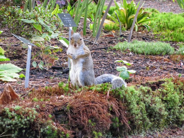 Squirrel at the Royal Botanic Garden Edinburgh