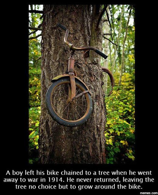 Arbol crece alrededor de una bicicleta