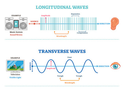 transverse longitudinal waves