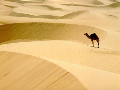 Beautiful Desert Normal Resolution HD Wallpaper 6