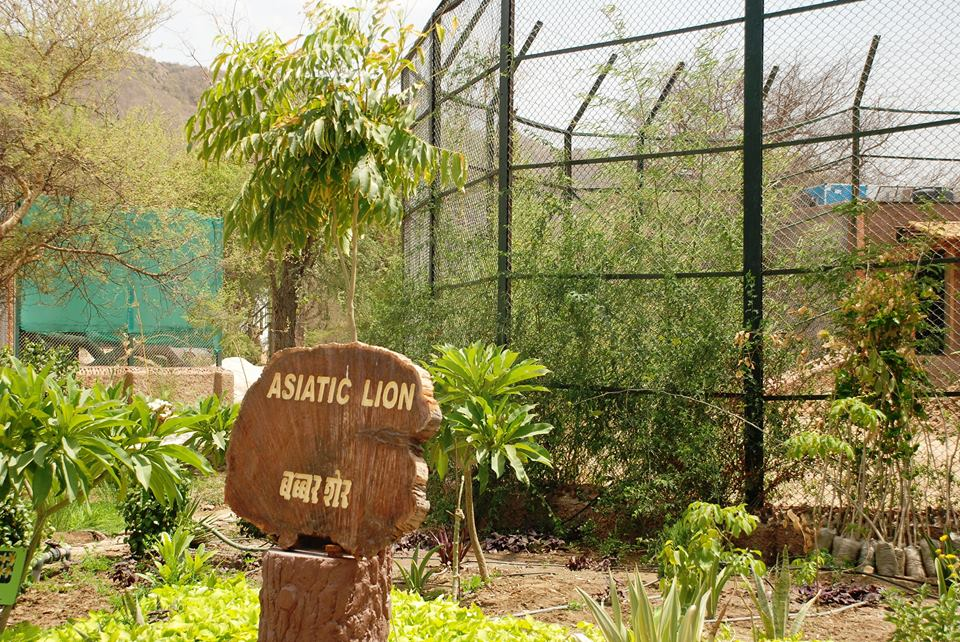 There Are Currently 23 Lions And 12 Tigers At National Biological Park  According To The Central Zoo Authority.