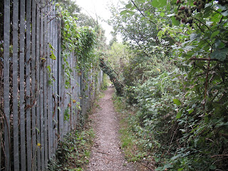 Path surrounded by trees with a grey fence on the left