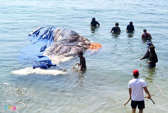 'Bảo tàng' xương cá voi ở Lý Sơn - Hình 2