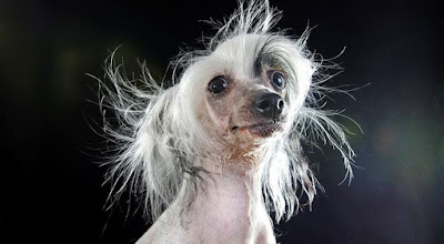 Τα πιο «άσχημα σκυλιά» είναι τελικά πολύ όμορφα