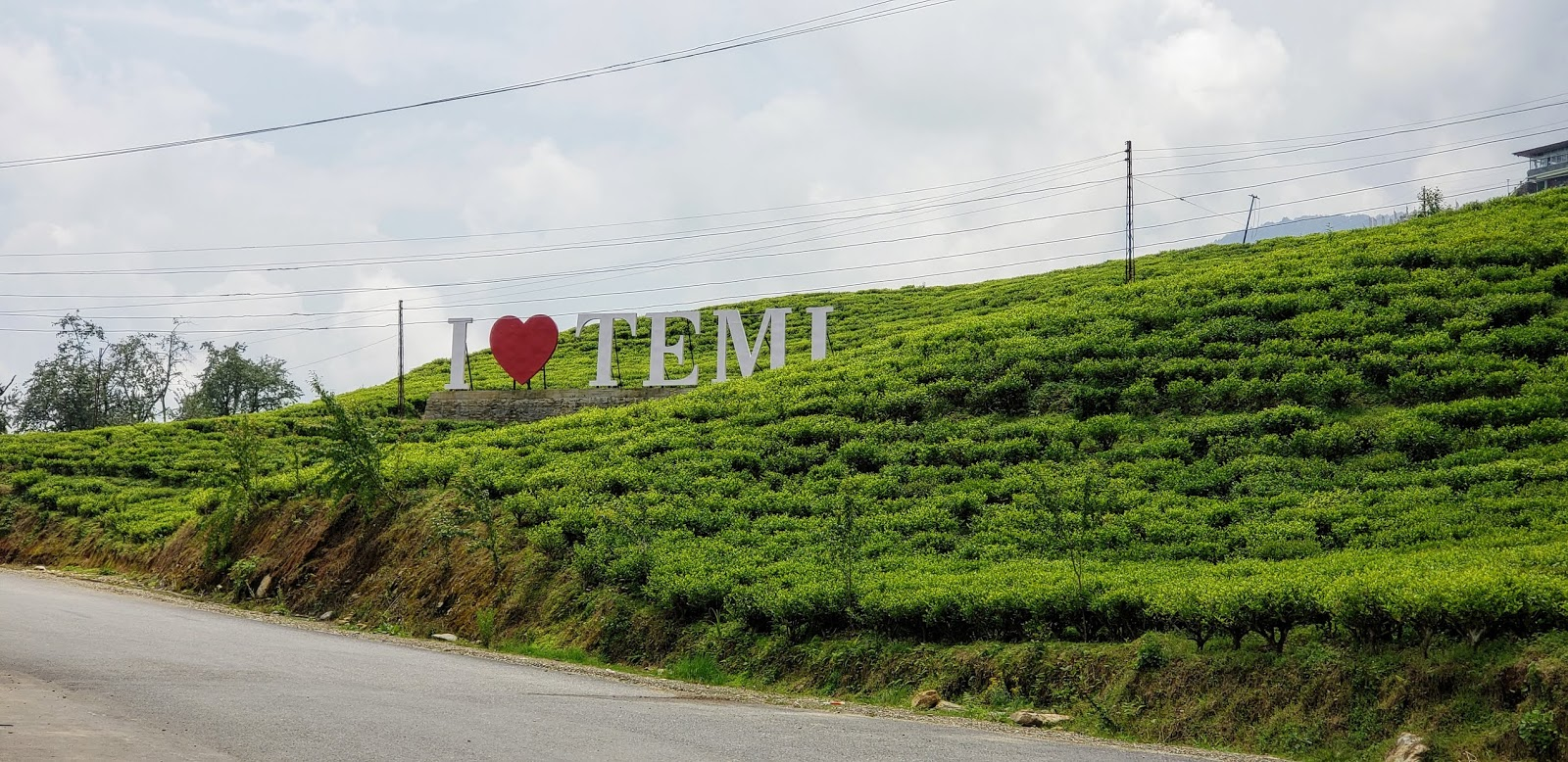 Temi Tea Estate