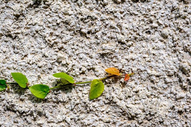 A planta no muro