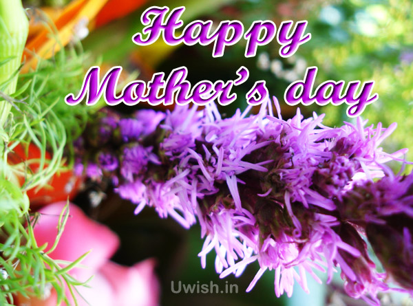 Happy Mothers day e greeting cards and wishes with purple flowers.