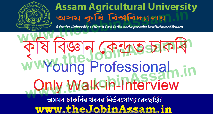 KVK of AAU Recruitment 2021: Young Professional Vacancy - Walk in Interview