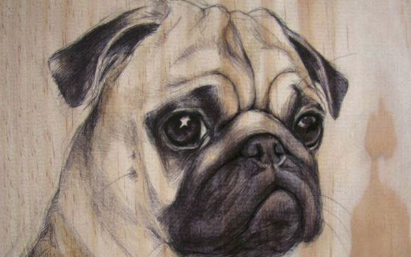 05-Pug-00-Martina-Billi-Recycled-Wooden-Planks-Used-to-Draw-Animals-www-designstack-co