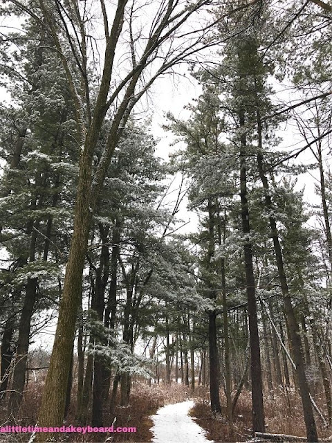 Avenue of white pines beckons at Heller Nature Center.