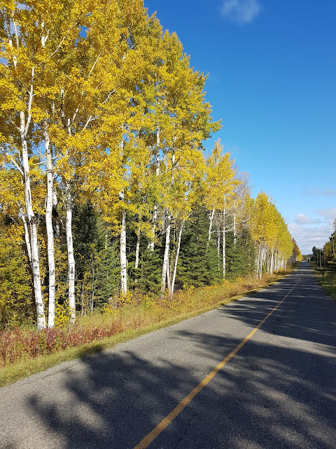 Fall colours on Hacquoil Rd. Thunder Bay