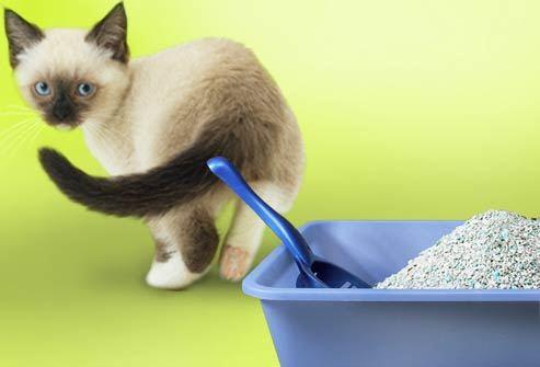 el gato tiene un tratamiento de cristal