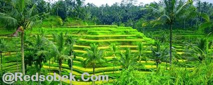 Tegalalang Tourism Site 1