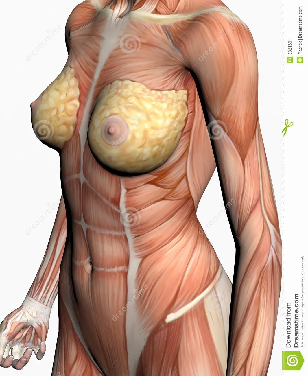 Perfecto Imagen Anatomía Mujer Viñeta - Imágenes de Anatomía Humana ...