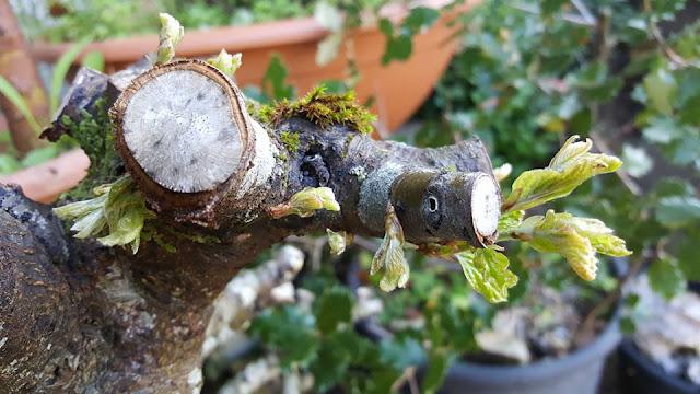 #BetiConsejo: la naturaleza nos deja sin argumentos a cada momento.