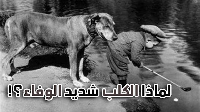 وفاء الكلب
