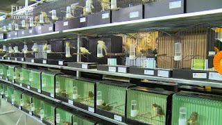 canary farm