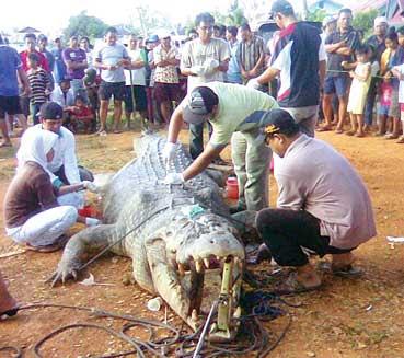 Inilah 7 buaya terbesar di dunia yang paling menyeramkan di negeri luar sana mempunyai reptil predator raksasa dan di indonesia rupanya juga punya kalimantan yup siapa tidak kenal dengan kota ini yang sudah reheart Images