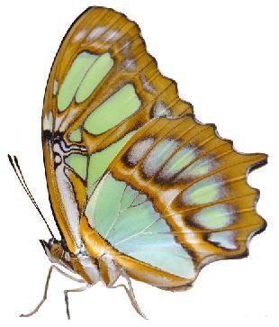https://www.encywiki.com/2019/09/free-png-butterfly008.html