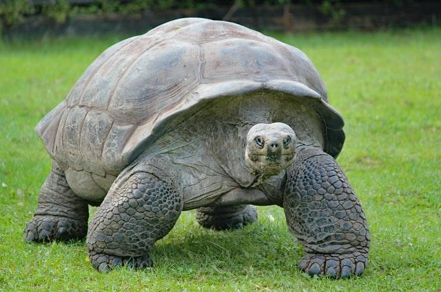 aprende ingles animal tortuga terreste patas cesped tortoise