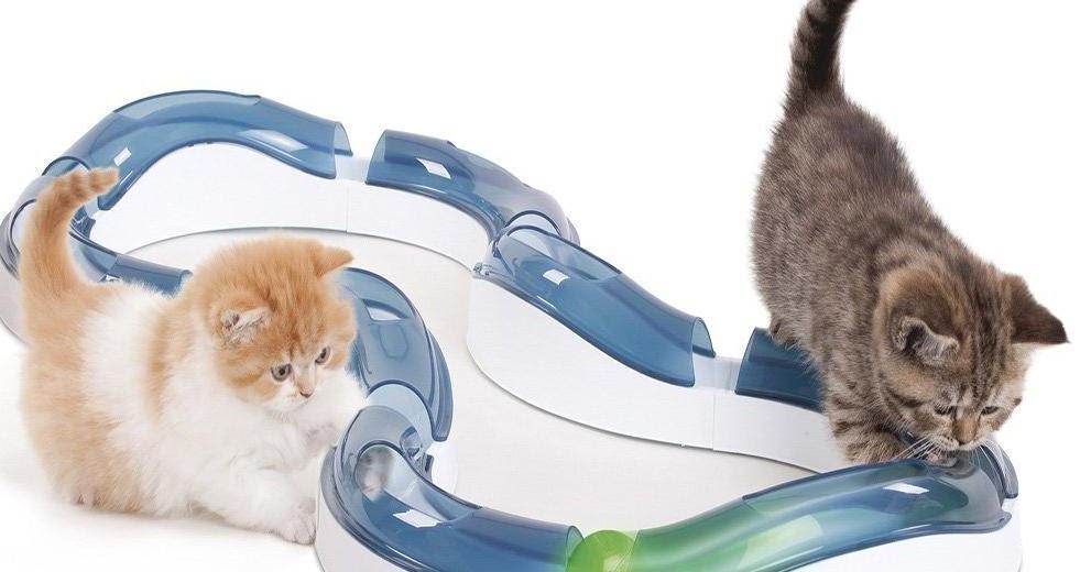 Cat Keeps Making Sneezing Noises