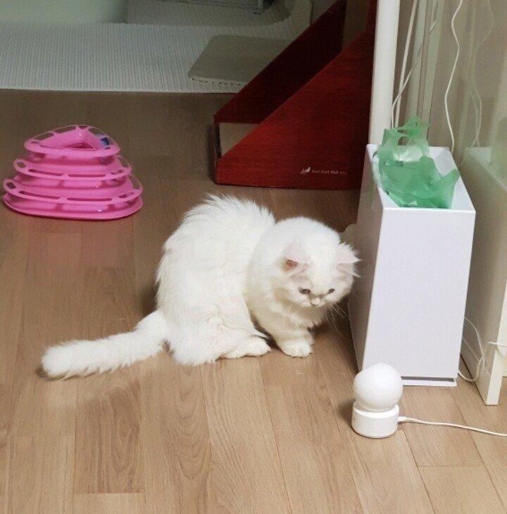 고양이를 감시하는 홈캠을 감시하는 고양이 -