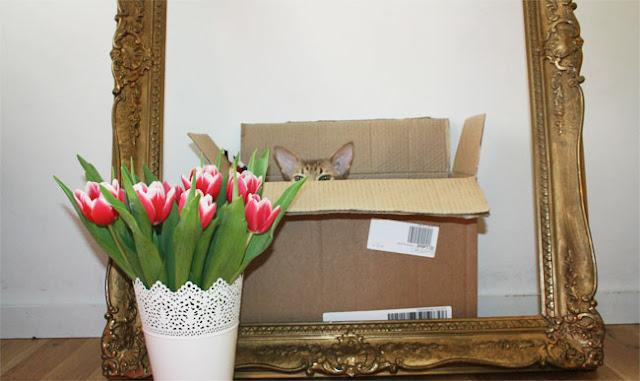 schöne bilder mit katze vintage rahmen tulpe interor design