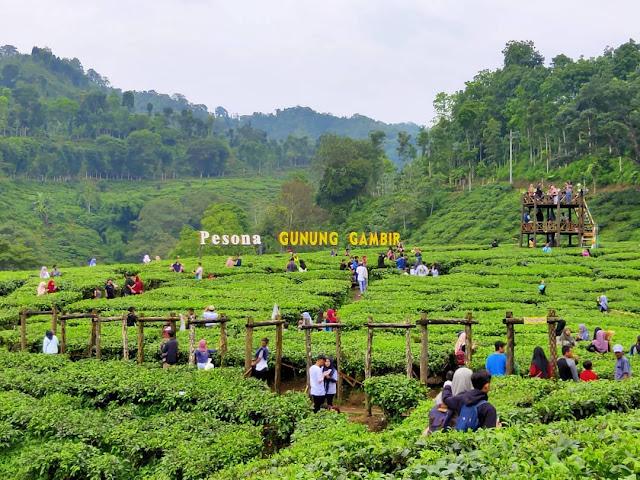 Kebun Teh Di Jawa Timur