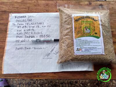 Benih pesana MUALIM Merauke, Papua..  (Sebelum Packing)