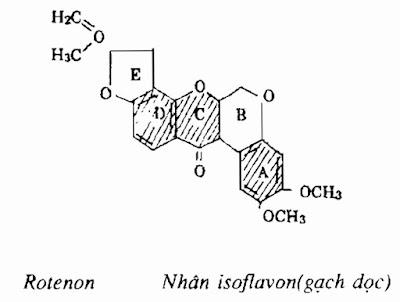 Thành phần hóa học Dây Thuốc Cá - Derris elliptica - Nguyên liệu làm thuốc Có Chất Độc
