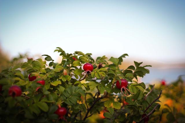 parcdubic,rosierssauvagesdubic,basdufleuve,lebic,parcnationaldubic,emmanuellericardphoto
