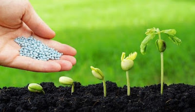 El Mejor Abono Orgánico para Plantas