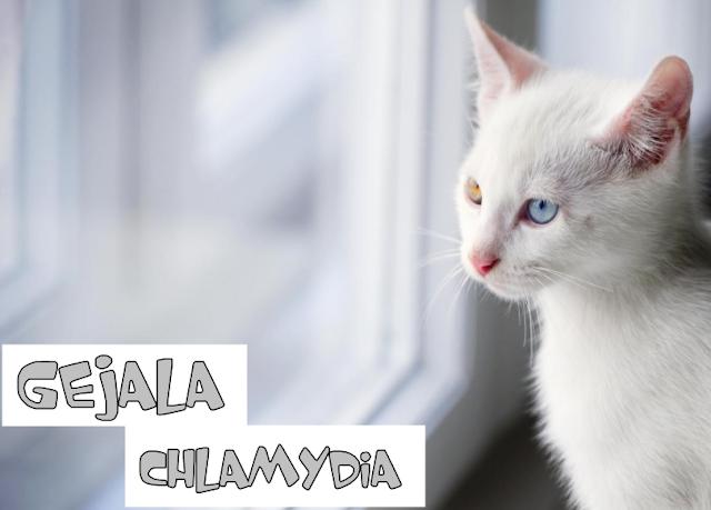 Obat Chlamydia Kucing di Apotik