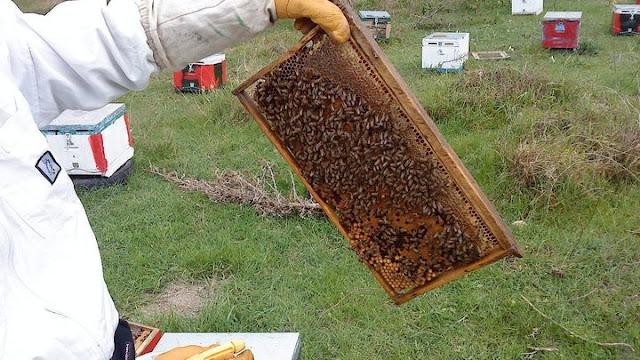 Ξεκίνησαν οι δηλώσεις κατεχόμενων κυψελών για τους μελισσοκόμους της Αργολίδας