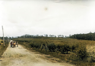 hamparan teh hijau dan jalan perkebunan teh pematangsiantar