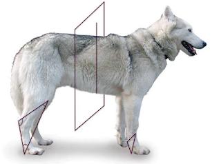 cães e seu peso