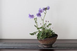 大竹慎一郎先生の山野草盆栽の鉢