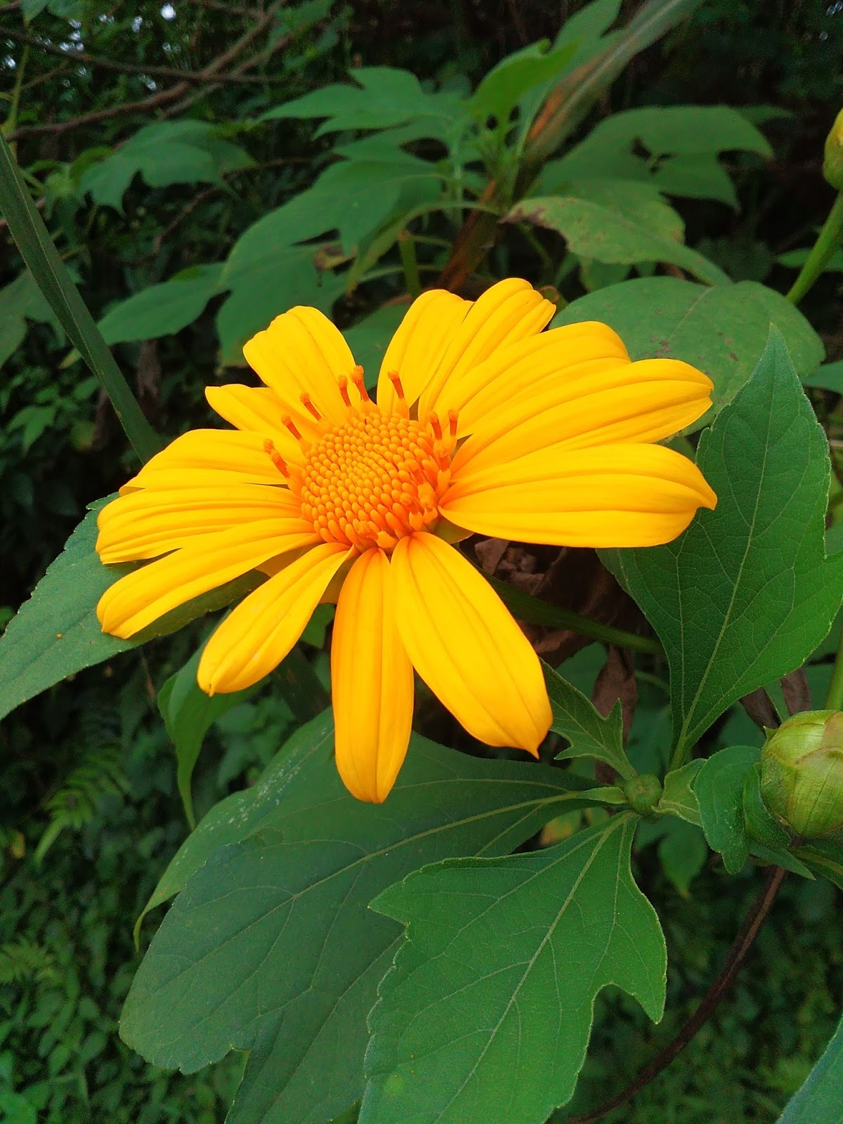 Garden Therapy: Most Amazing Flower