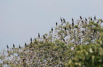 Pulau Burung