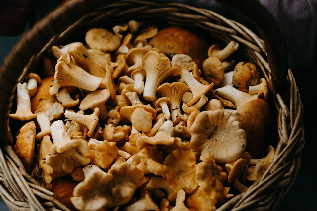 6 Weird Health Benefits of Mushrooms That Might Surprise You